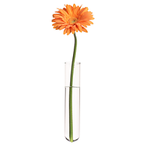 beaker glass tube wall vase