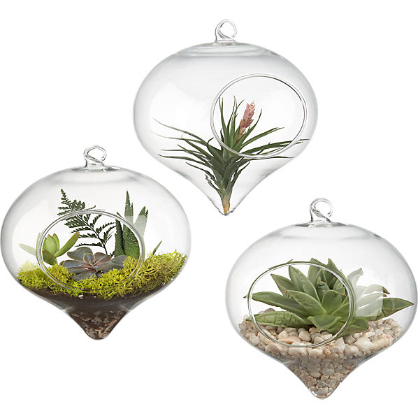 hanging glass terrarium cb2. Black Bedroom Furniture Sets. Home Design Ideas