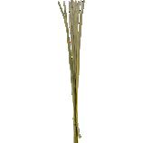 set of 25 green palm sticks