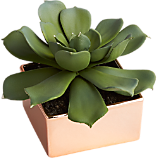 potted succulent with copper pot